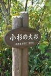 Kosugi_2
