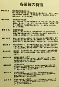 Kokeshitokutyo_3