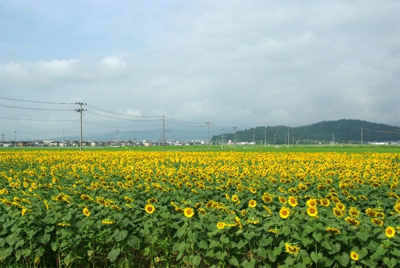 Himawari0901